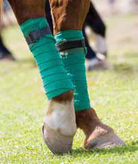 Tratamiento caballo Barcelona